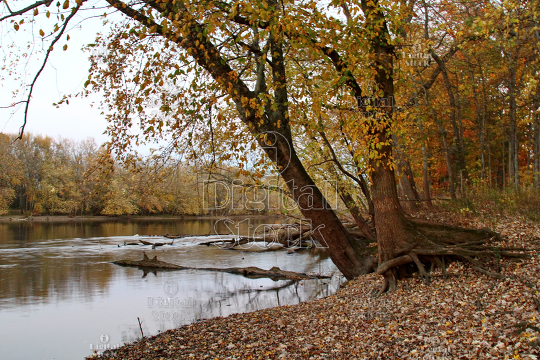 A river in the woods in Autumn season - iDigitalStock - Royalty free stock  images and videos.